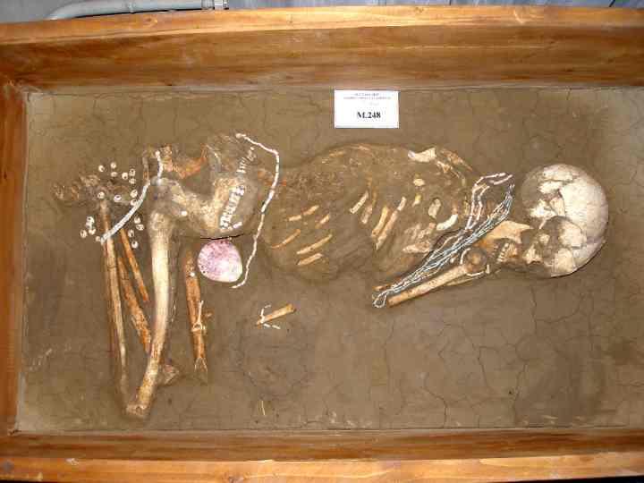 schelet uman - Muzeul Civilizaţiei Gumelniţa - OLTENIŢA (Patrimoniul Cultural National Mobil din Romania. Ordin de clasare: 2279/22.04.2008 - Tezaur)